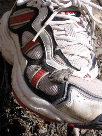 peeper on sneaker