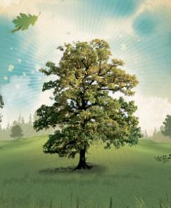 nrdc tree art