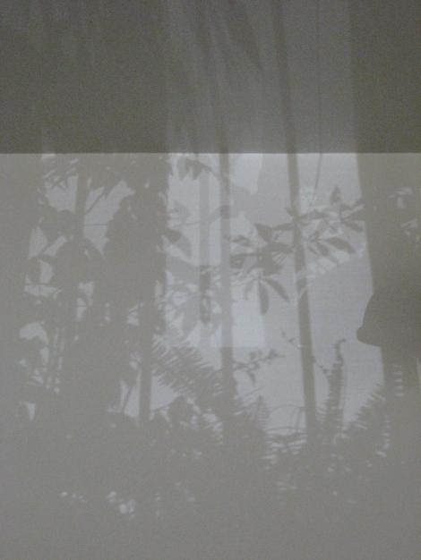 shadow_one