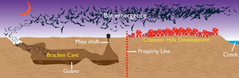 bats and bedrooms