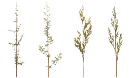 Fractal_weeds