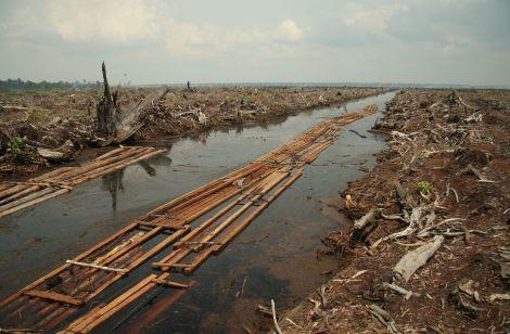 1280px-Riau_deforestation_2006